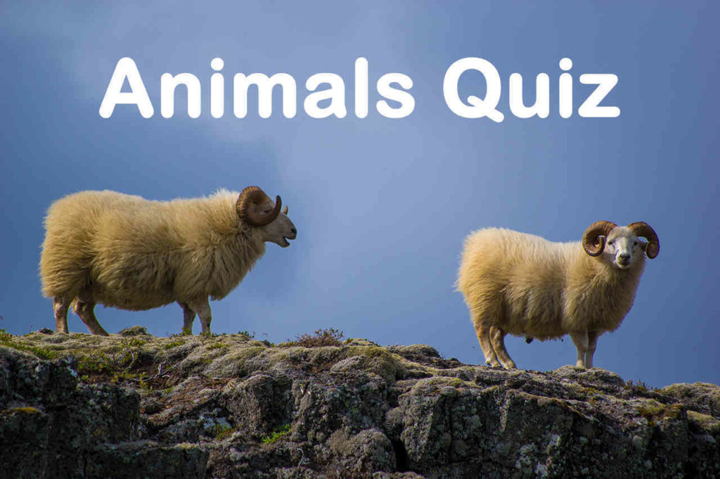 Animal Quiz Questions and Answers