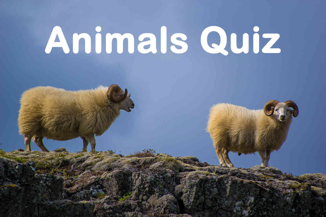 Animals Quiz Questions and Answers